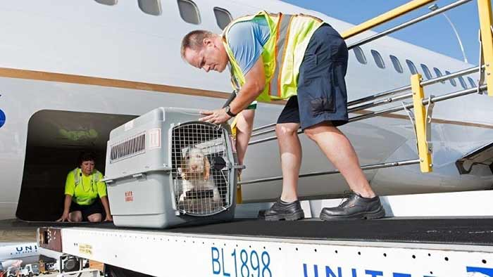 حمل و نقل حیوانات خانگی با هواپیما