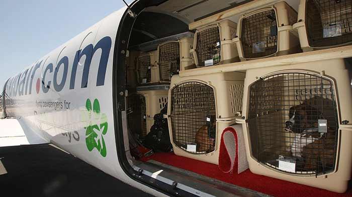 روش های حمل و نقل حیوانات خانگی با هواپیما